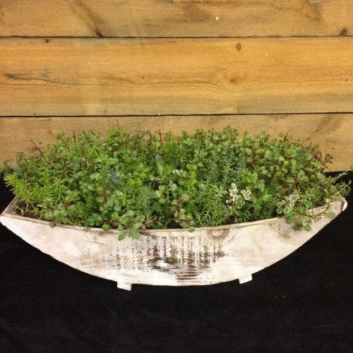 Jardin de succulent