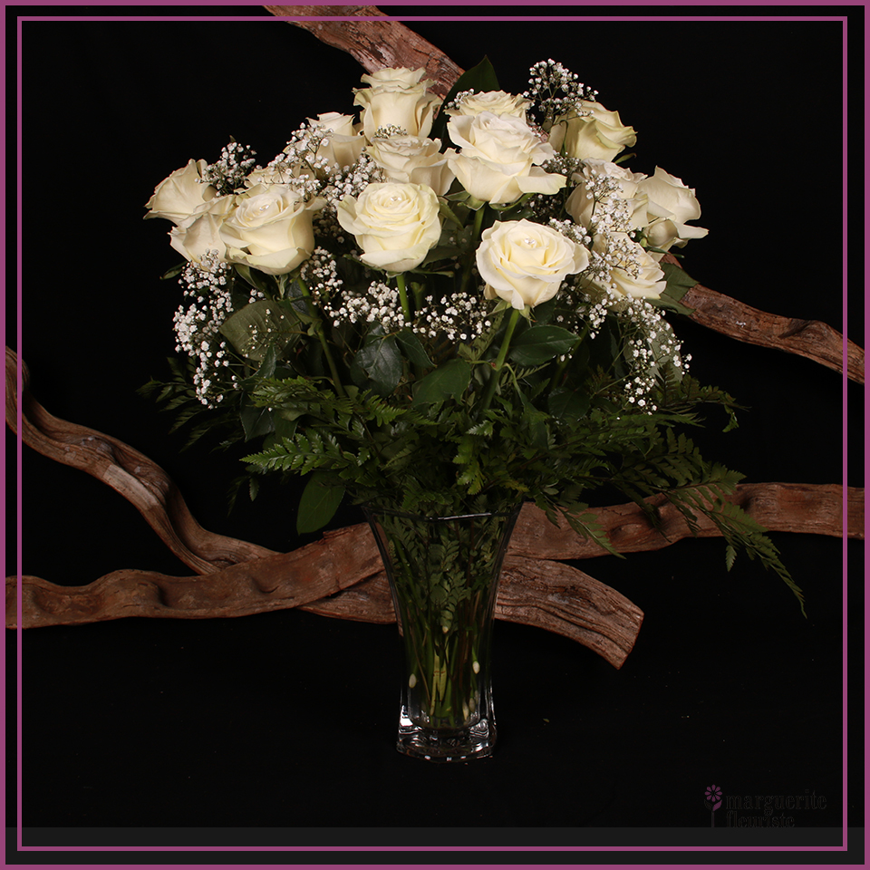 24 roses blanche