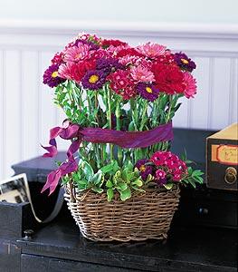 Bouquet de fleurs de champs, matsumoto, marguerite,